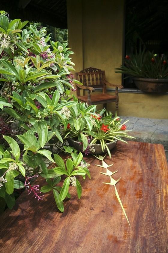 Garden in Tagaytay